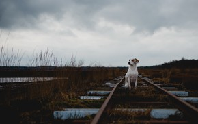 Picture loneliness, each, dog, railroad