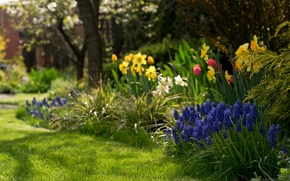 Picture flowers, spring, flowerbed