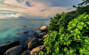 Picture sea, greens, water, nature, tropics, stones, Bush