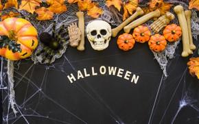 Picture skull, web, bones, Halloween, pumpkin, sake, Halloween, pumpkin, bones