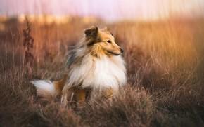 Wallpaper dog, nature, autumn, each
