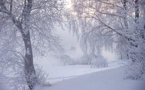 Wallpaper Ed Gordeev, Saint Petersburg, winter, fog, frost, trees, photographer