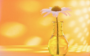 Picture background, Daisy, vase, bottle