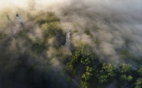 Picture forest, fog, antenna