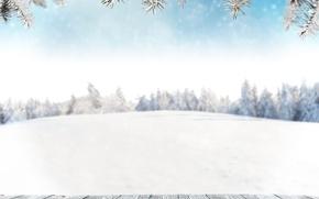 Picture Winter, Snow, Branches, Board, Template