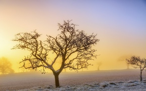 Picture frost, fog, tree, morning