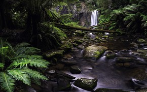 Picture stones, waterfall, fern