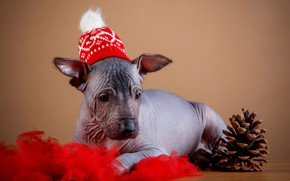 Picture holiday, hat, new year, puppy, fabric, bump