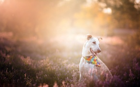 Picture light, nature, dog