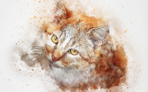 Picture figure, muzzle, red cat