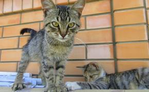 Picture cat, cat, kittens
