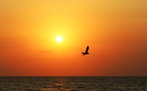 Picture sea, sunset, Seagull, the evening
