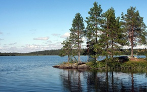 Picture forest, lake, pine