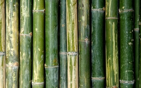 Picture green, Bamboo, pattern