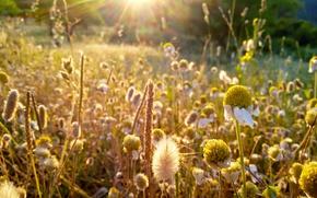 Picture Grass, macro, Greece, rays of sun, Last rays, daisies