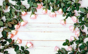 Picture flowers, roses, pink, buds, fresh, wood, pink, flowers, romantic, roses, tender