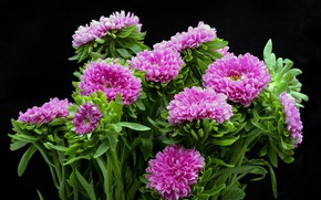 Picture bouquet, black background, asters