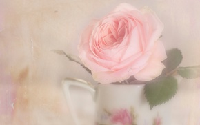 Picture flower, leaves, flowers, background, rose, roses, light, Bud, art, haze, pitcher, gently, blurry, dissolution, pastel ...