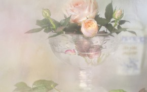 Picture style, tenderness, rose, Bud, vase