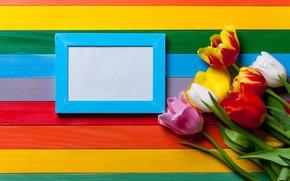 Wallpaper rainbow, colorful, colors, tulips, tulips, flowers, rainbow, flowers