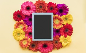 Picture flowers, spring, frame, colorful, chrysanthemum, flowers, spring, bright