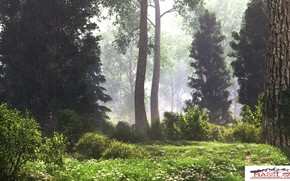 Picture forest, trunks, vegetation, haze, foggy clearing