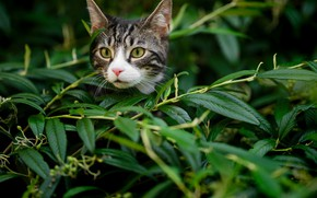Wallpaper leaves, cat, branches, kitty, muzzle, look