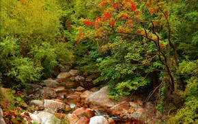 Picture Autumn, Forest, Stones, Fall, River, Autumn, Colors, River, Forest