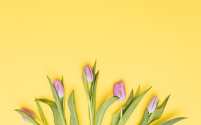 Picture flowers, tulips, pink, fresh, pink, flowers, tulips, spring, tender