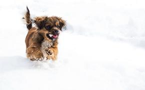 Wallpaper winter, snow, puppy, dog