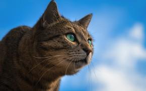 Picture the sky, cat, look, portrait, muzzle, cat