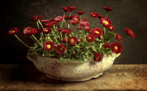 Picture flowers, background, vase, Daisy