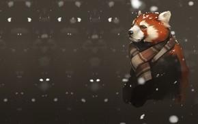 Picture snow, red Panda, art, the first snow, Alexander Khitrov, GaudiBuendia