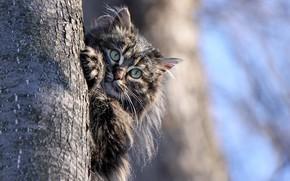 Wallpaper cat, trunk, animal, cat