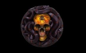 Picture skull, snake, Grigory Lebidko, 12 Sins: Envy