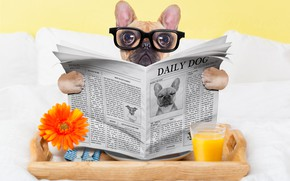 Picture glass, dog, humor, juice, glasses, newspaper, eyepieces