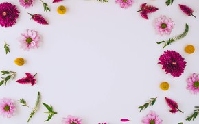 Picture flowers, chrysanthemum, pink, flowers, background, frame, floral
