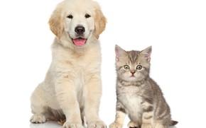 Picture kitty, puppy, kids, friends, puppy, Retriever, kittens