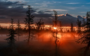 Picture forest, the sky, the sun, light, nature, the evening, morning