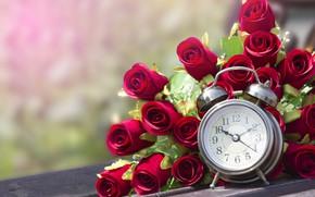 Picture roses, bouquet, alarm clock, buds, bouquet, roses, buds, alarm clock