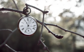 Picture time, watch, branch