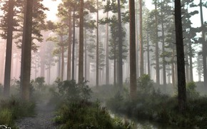 Picture forest, trees, stream, morning, pine forest