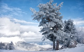Picture The sky, Winter, Tree