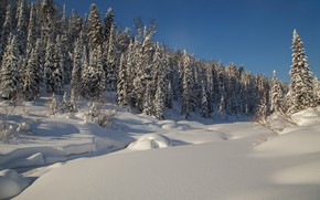 Picture winter, forest, snow, trees, ate, the snow, Russia, taiga, Siberia, River Amzas