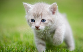 Picture grass, baby, kitty, bokeh