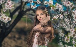 Picture spring, girl, flowering, Ivan Slavov