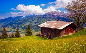 Picture grass, clouds, trees, flowers, mountains, Switzerland, valley, slope, house