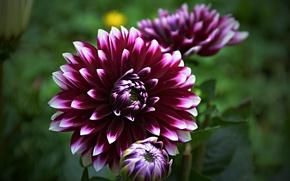 Picture Flower, Bokeh, Bokeh, Macro, Purple flower