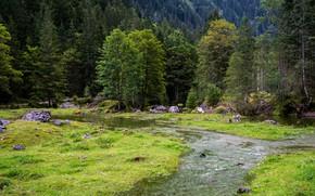 Picture greens, forest, grass, trees, stream, stones, glade, Austria, Gosau