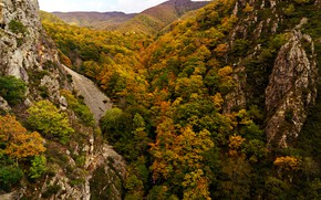 Picture autumn, forest, trees, mountains, stones, rocks, the view from the top